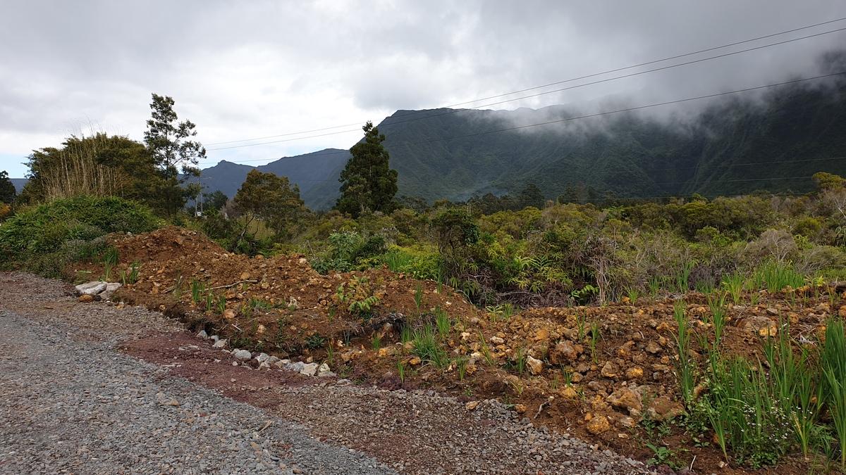 Vente Terrain La Plaine-des-Palmistes